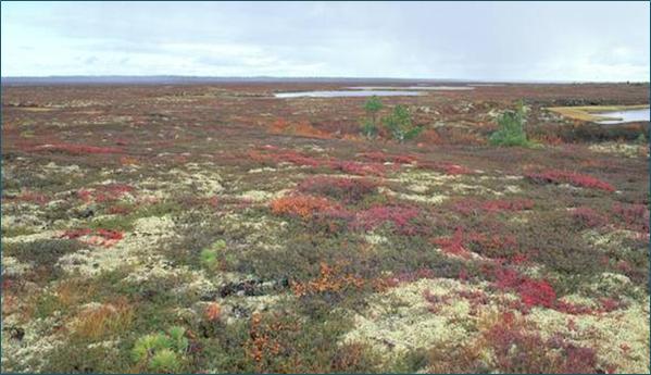 tundra slika1